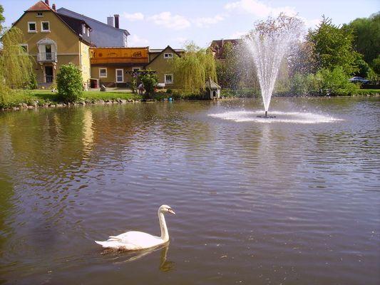 Schwan im Stadtweiher :)