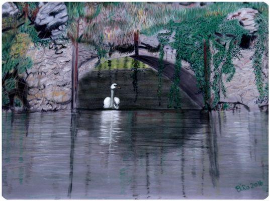 Schwan unter der Brücke