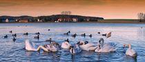 Schwanensee von fred 1199