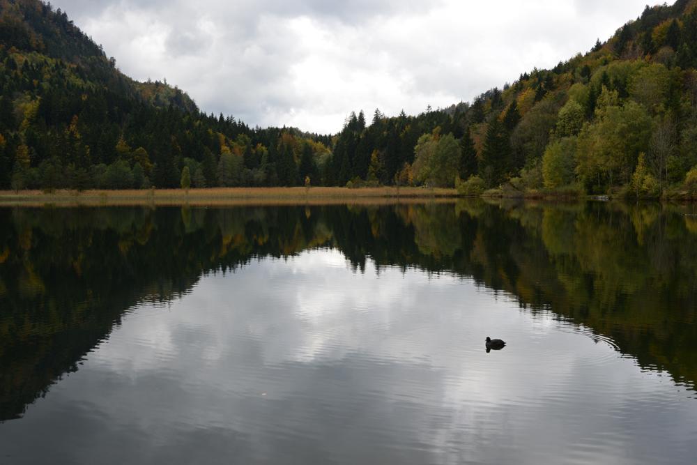 Schwanensee / Allgäu