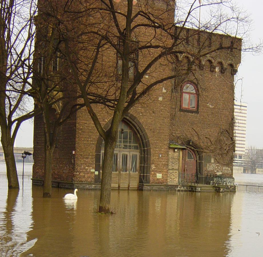 Schwanensee in Köln