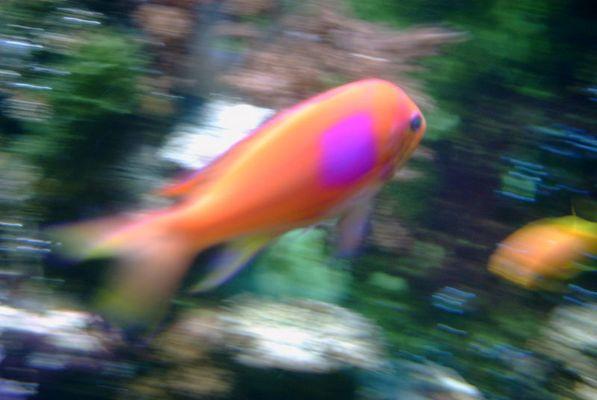 Schwarm Fisch