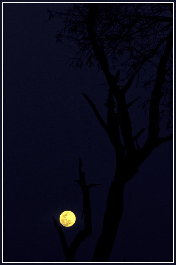 Schwarz & Blau & Mond