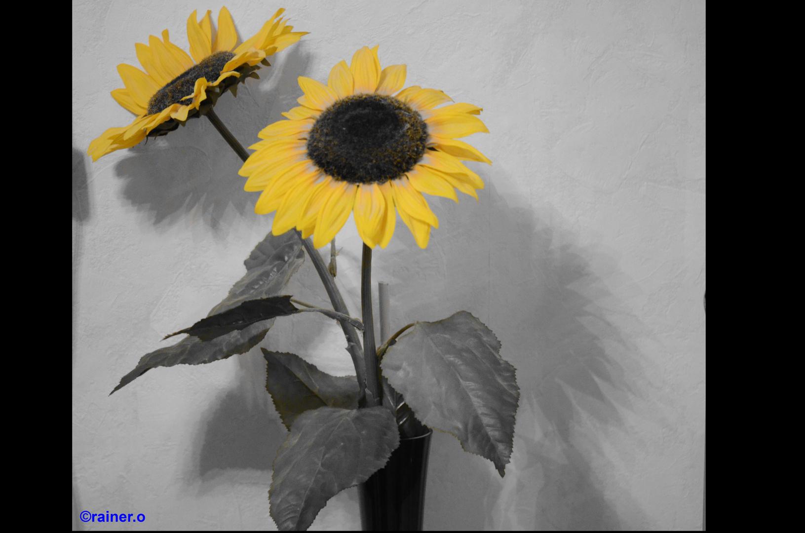 schwarz-gelb....