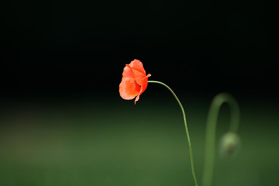 Schwarz-Grün-Rot