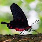 Schwarz-Rot Kombi
