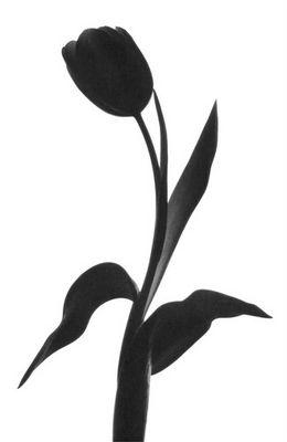 schwarz vor weiß