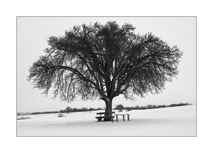 schwarz wei foto bild jahreszeiten winter natur bilder auf fotocommunity. Black Bedroom Furniture Sets. Home Design Ideas