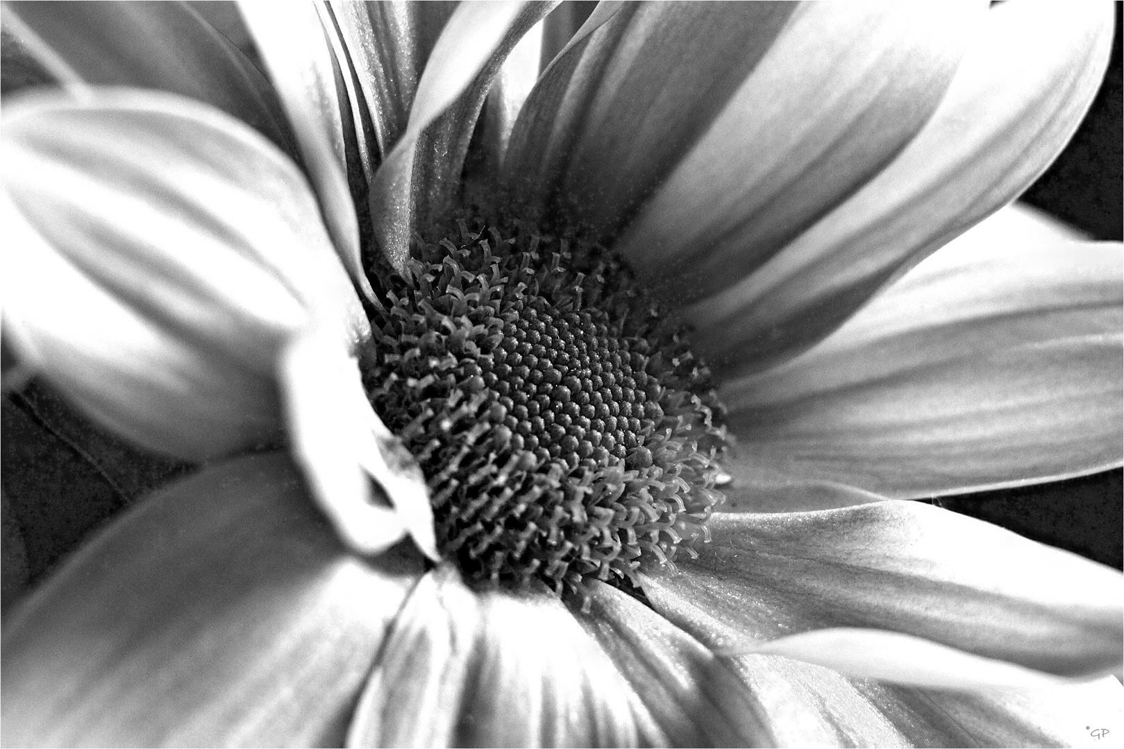 Schwarz-Weiß ......