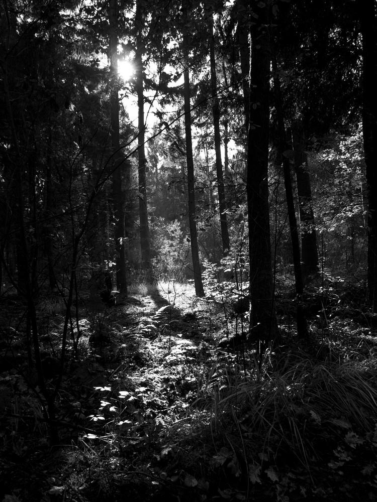 schwarz weiss die letzten sonnenstrahlen im herbst foto bild landschaft wald rund um den. Black Bedroom Furniture Sets. Home Design Ideas