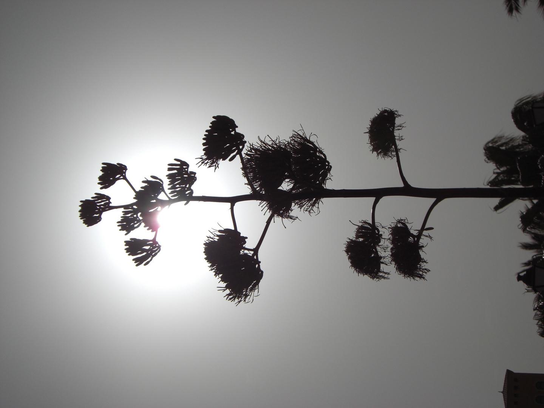 schwarz-weiß Effekt