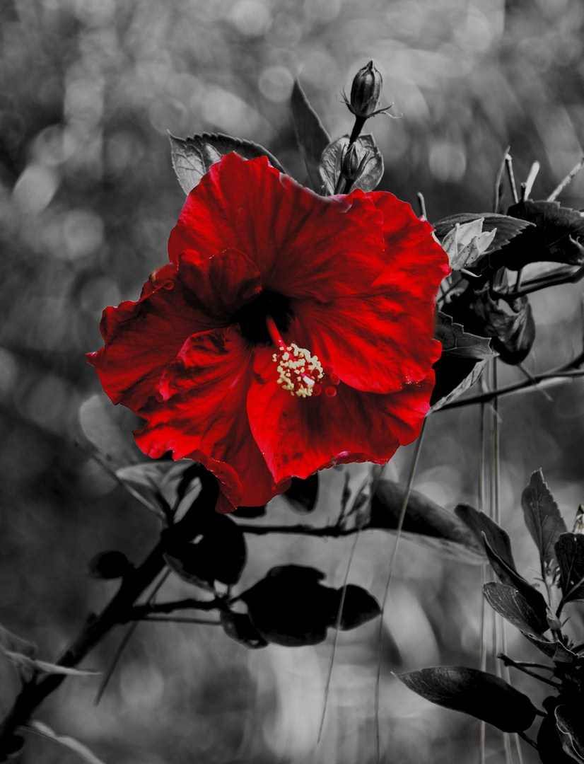 schwarz weiss farbe 4 foto bild pflanzen pilze flechten bl ten kleinpflanzen. Black Bedroom Furniture Sets. Home Design Ideas