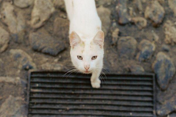 Schwarz --> Weiß --> Katze