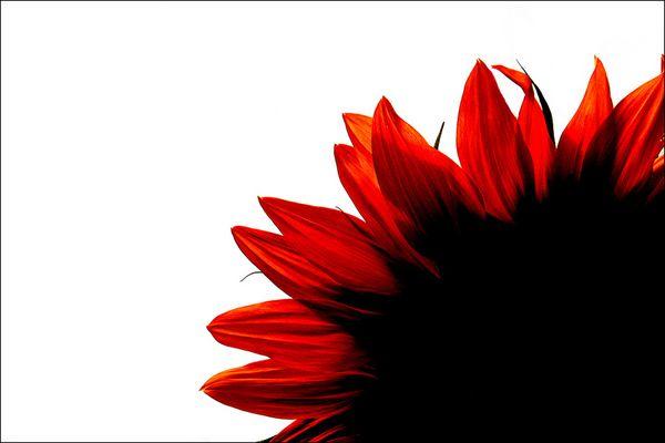 Schwarz-Weiß (Rot)