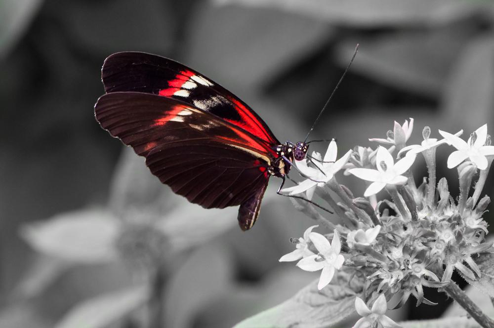Blumenbilder Schwarz Weiß schwarz weiß rot foto bild tiere zoo wildpark falknerei