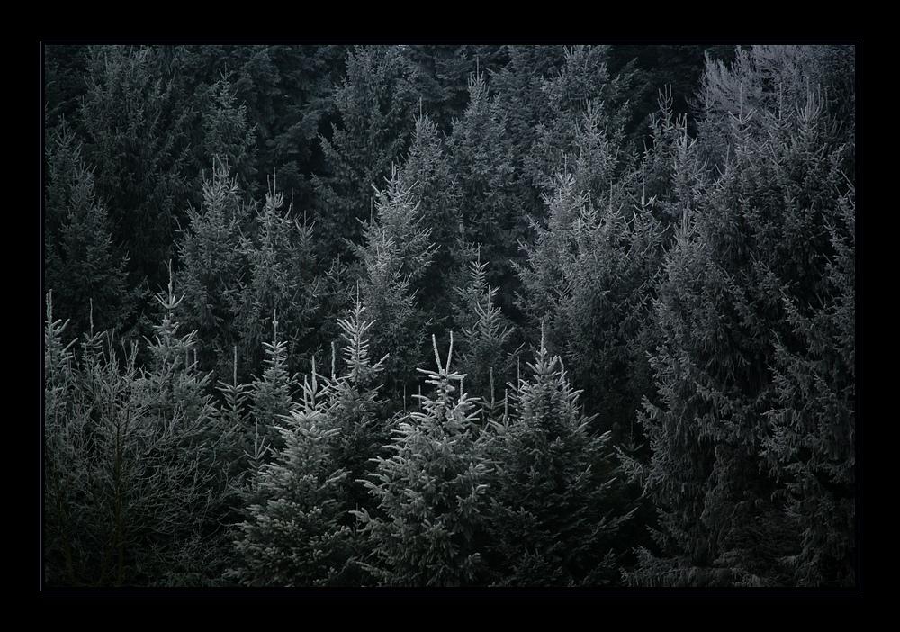 schwarz weiss wald foto bild landschaft wald aargau. Black Bedroom Furniture Sets. Home Design Ideas