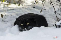 Schwarz-weiße Wintergschicht´n