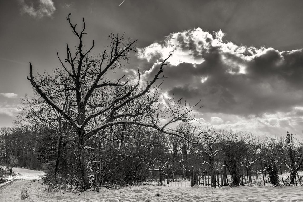 Schwarz-Weißer Winter