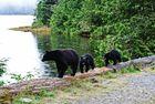 Schwarzbärenmutter mit ihren 2 Kindern