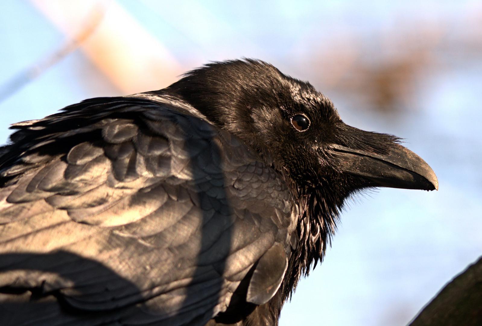 Schwarz,dunkel, unheimlich ! Schön.