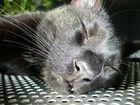 Schwarze Hauskatze beim sonnen