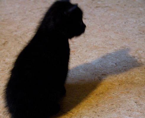 Schwarze Katze grauer Schatten