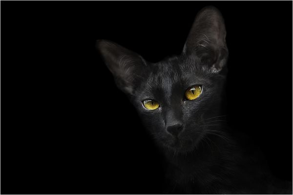 Schwarze Katze / noch eine