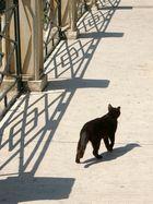 Schwarze Katze (Sciacca)
