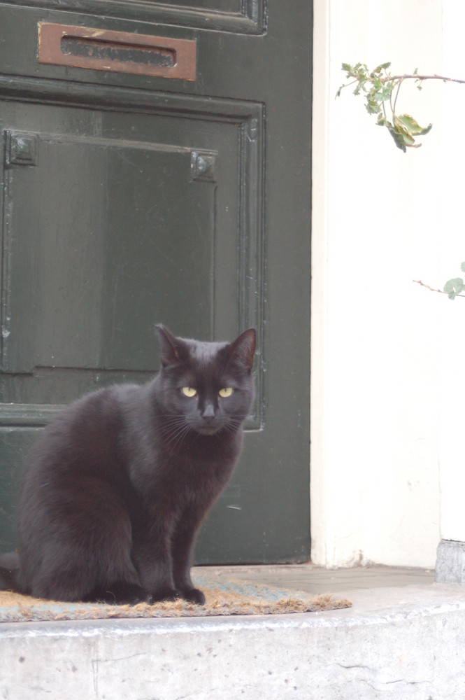 Schwarze Katze - Weiße Wand - Schwarze Tür