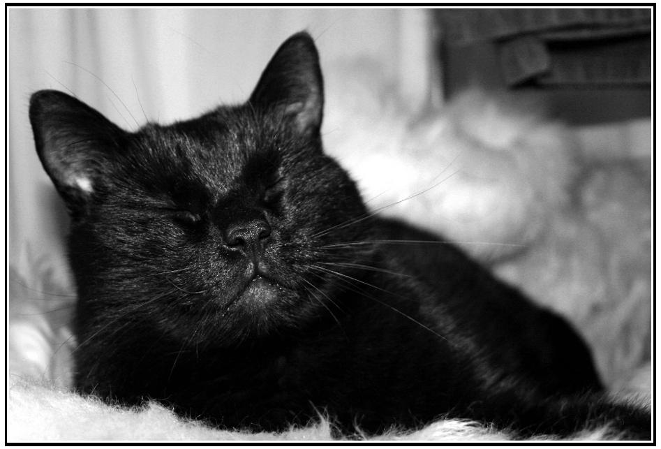 Schwarze Katze, weiße Wolke