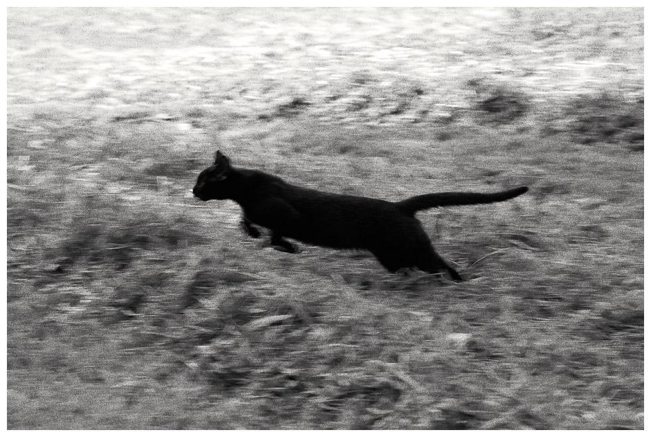 Schwarze-Katzen-Tag