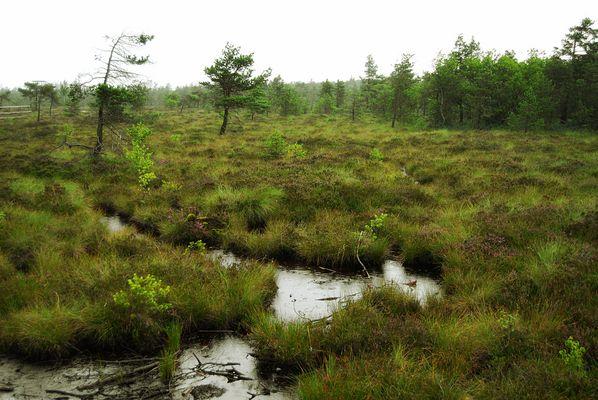 ... Schwarze Moor an einem Regentag