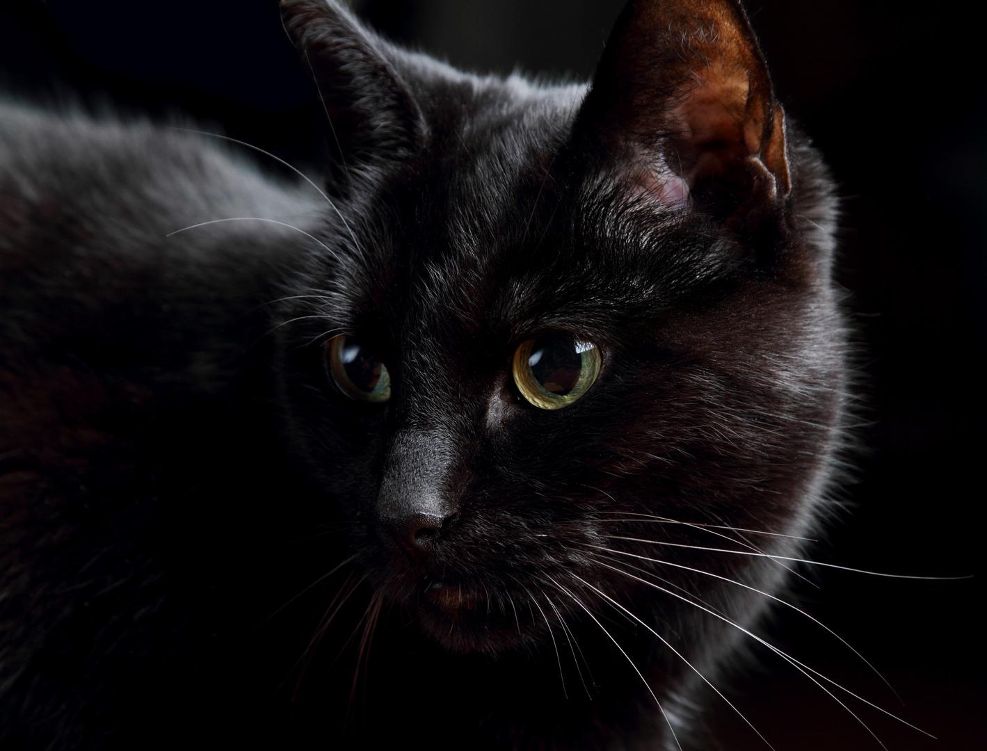 schwarze Perle