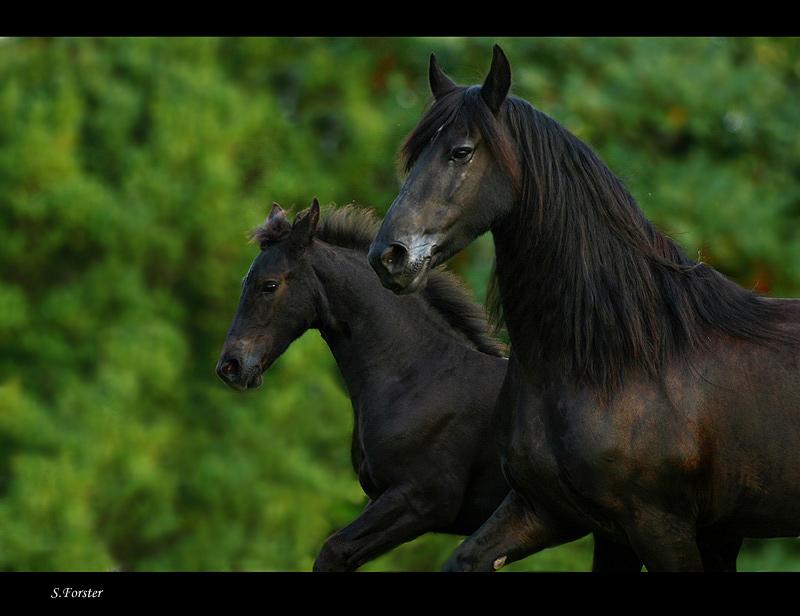 schwarze perlen foto bild tiere haustiere pferde. Black Bedroom Furniture Sets. Home Design Ideas