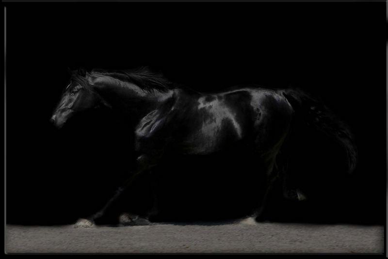 schwarze schönheit...