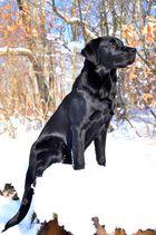 Schwarze Schönheit in der Wintersonne
