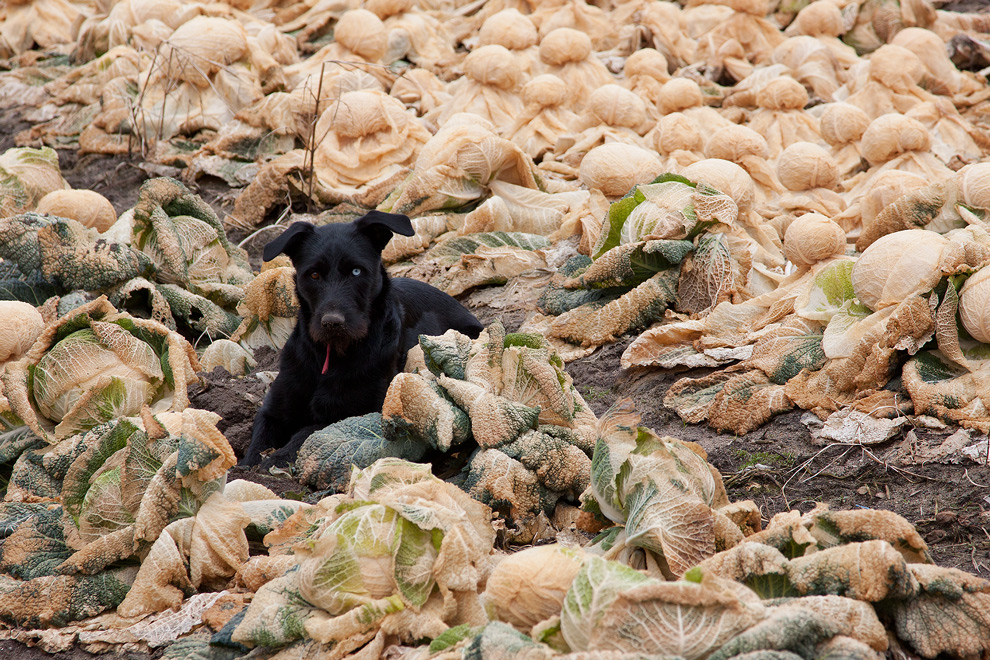 Schwarzer Hund mit unterschiedlicher Augenfarbe ....