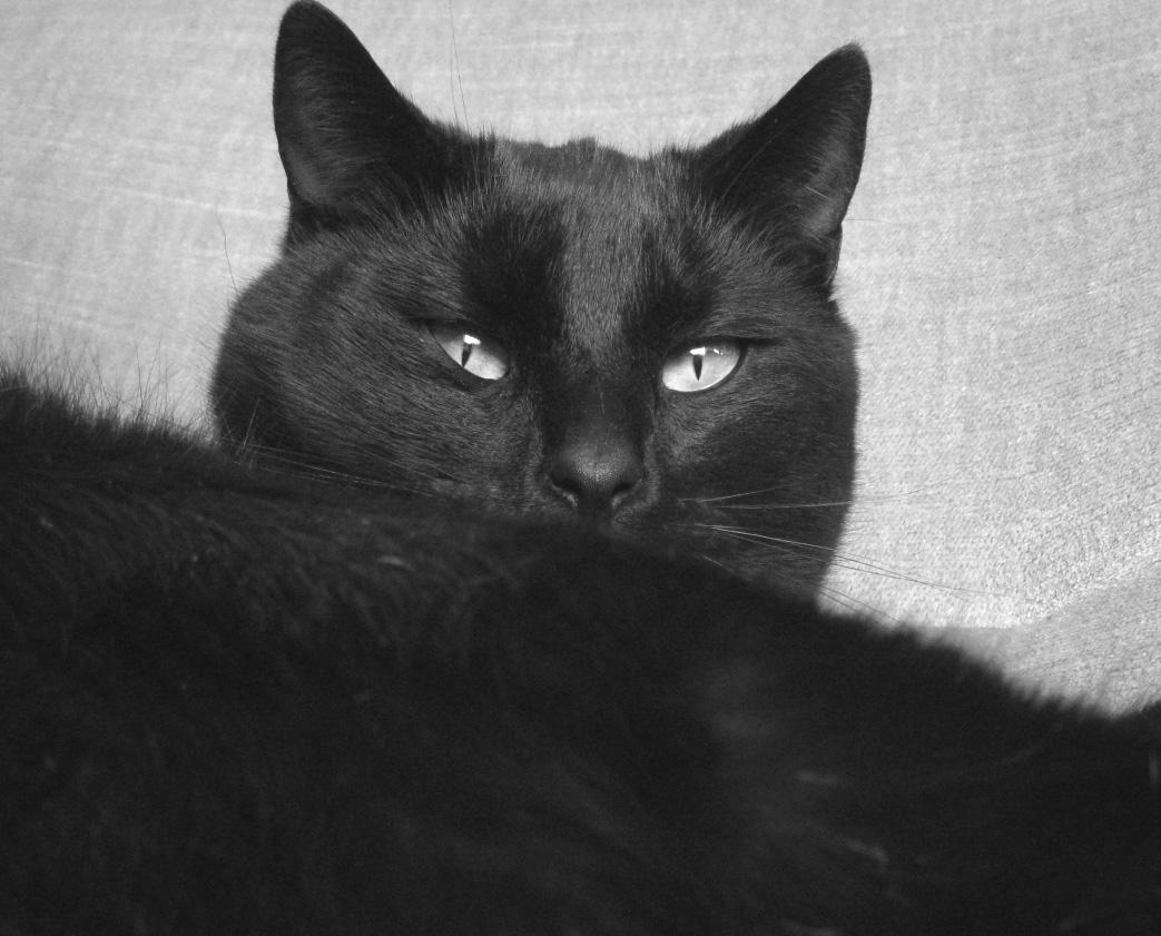 schwarzer kater foto bild tiere haustiere katzen bilder auf fotocommunity. Black Bedroom Furniture Sets. Home Design Ideas