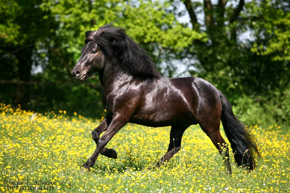 schwarzer teufel foto bild tiere haustiere pferde. Black Bedroom Furniture Sets. Home Design Ideas