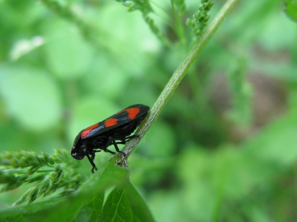 Schwarzes Biest mit roten Flecken