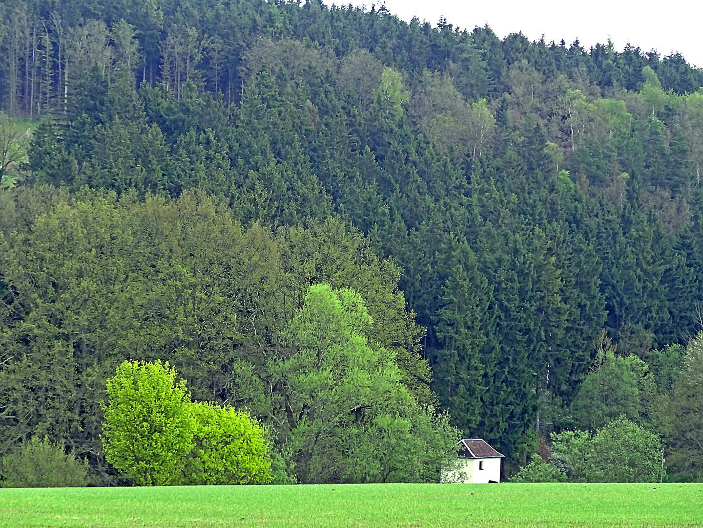 Schwarzes Holz schwarzes holz in plauen foto bild landschaft wald natur