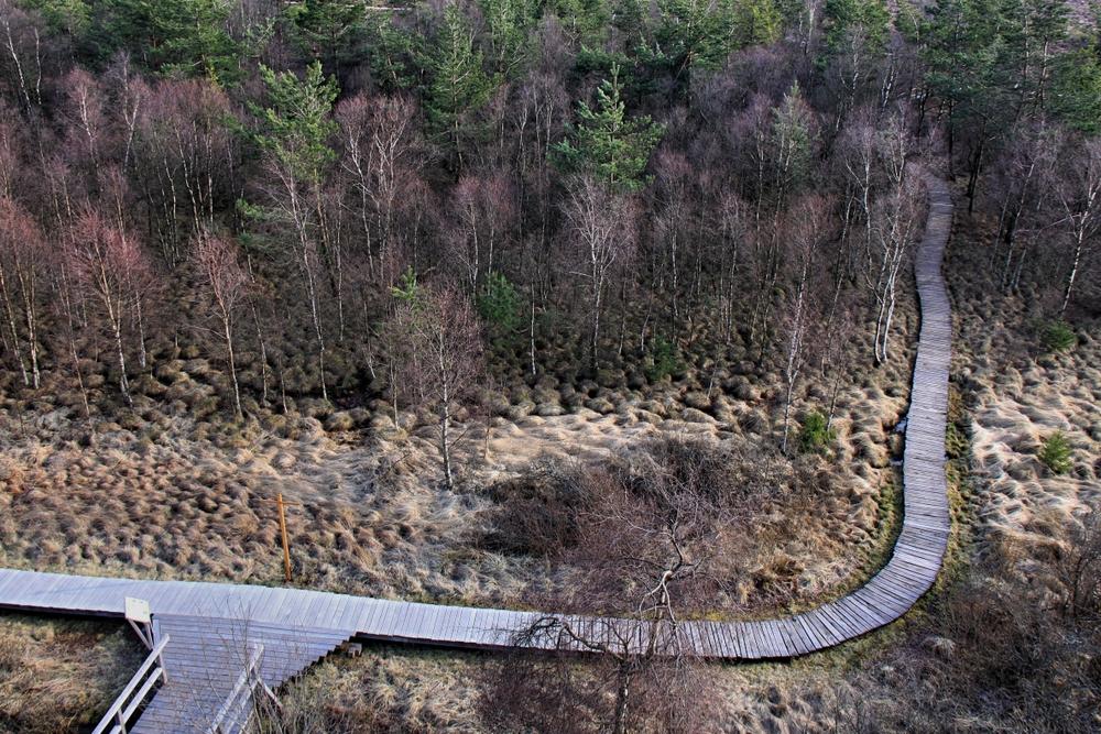 Schwarzes Moor (2)