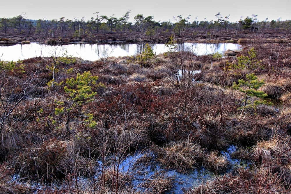 Schwarzes Moor (3)
