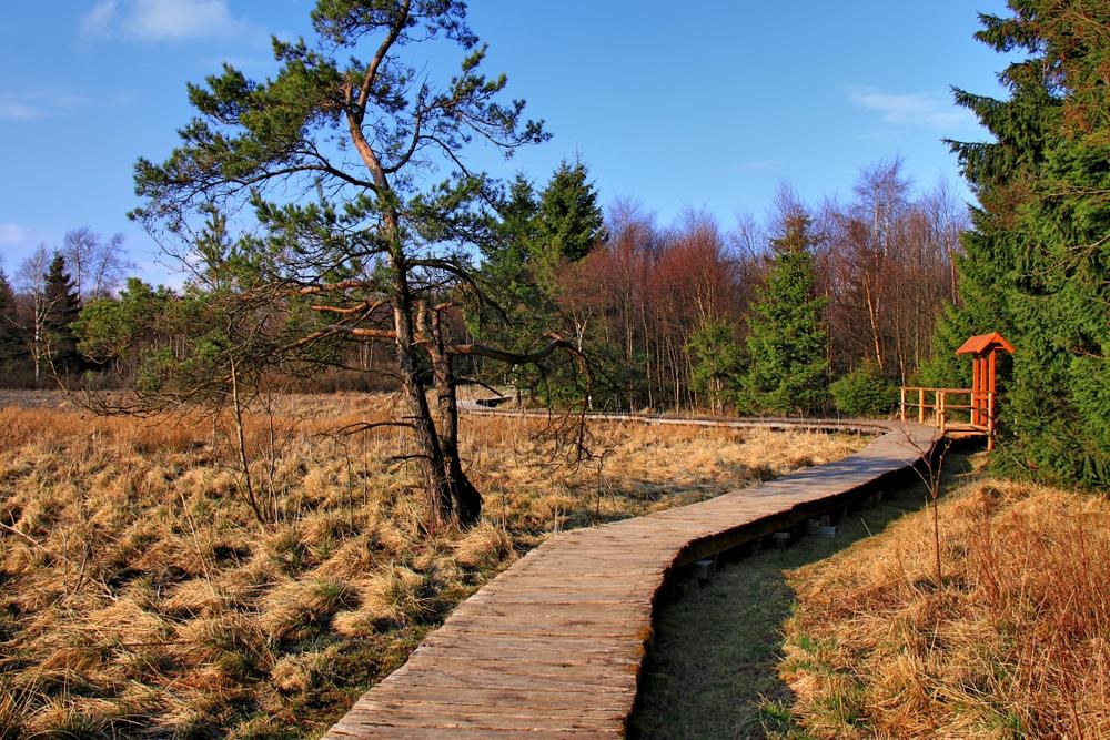 Schwarzes Moor (6)