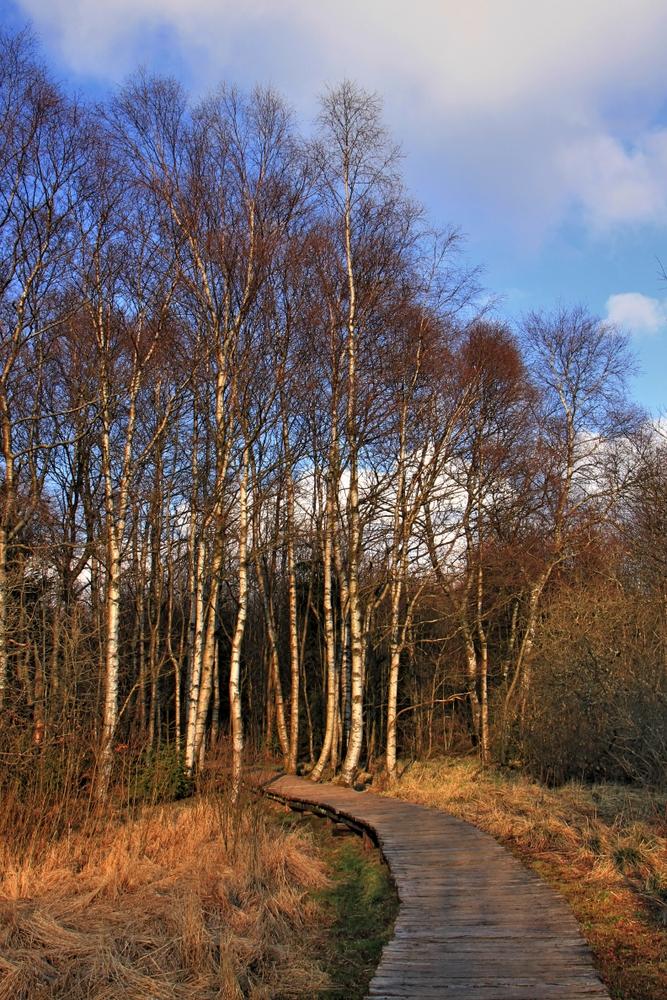 Schwarzes Moor (7)