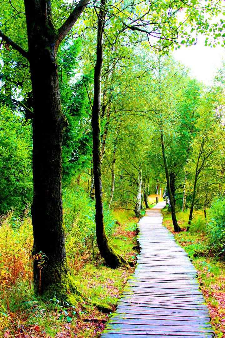 Schwarzes Moor Rhön