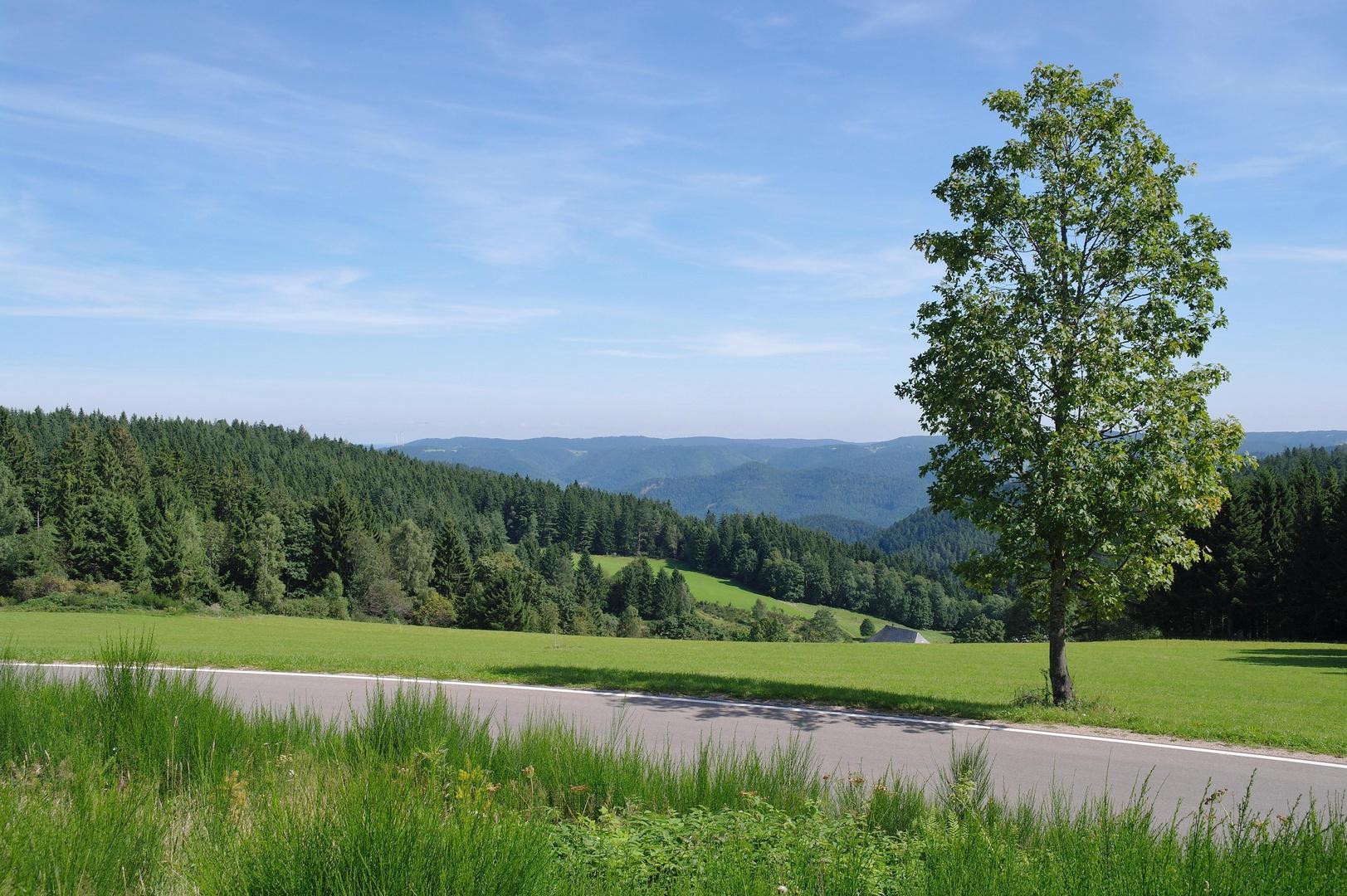 Schwarzwald _10_09_02_13