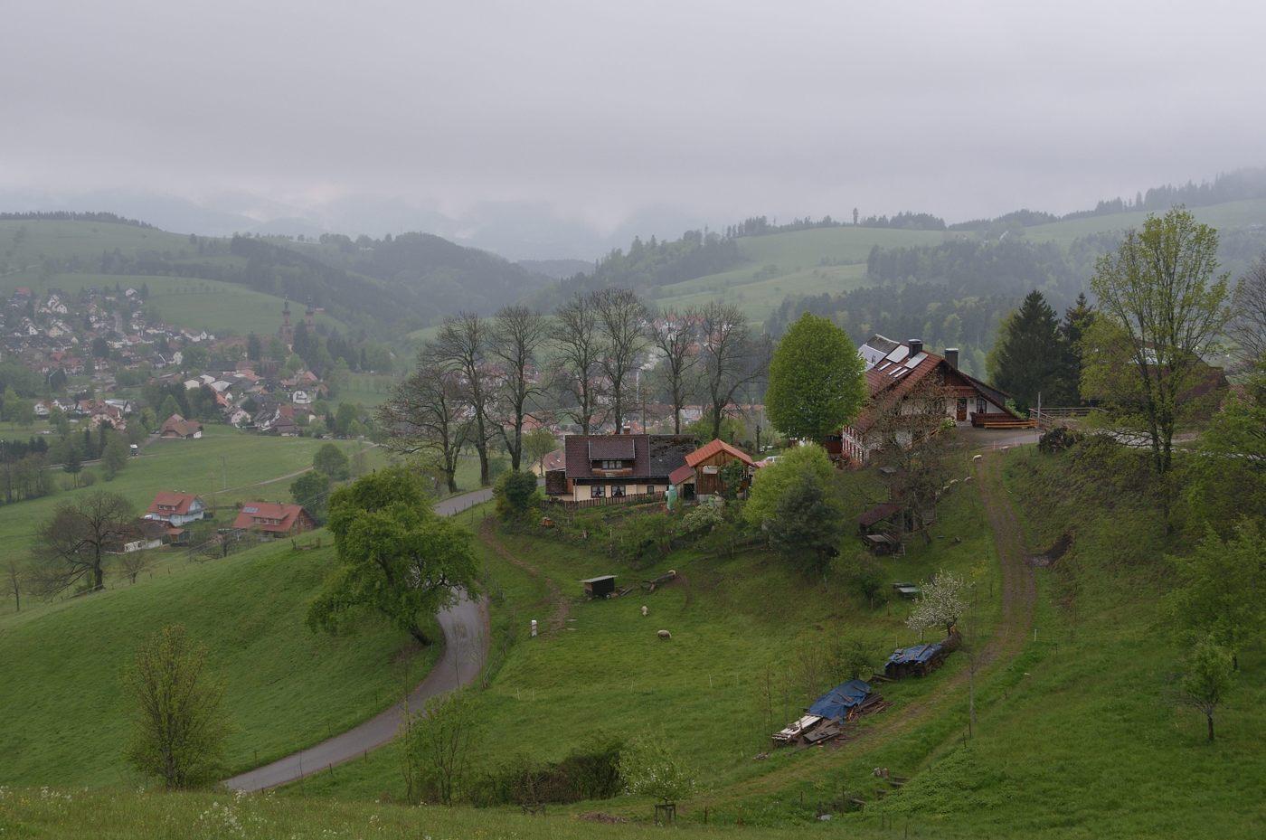 Schwarzwald #12