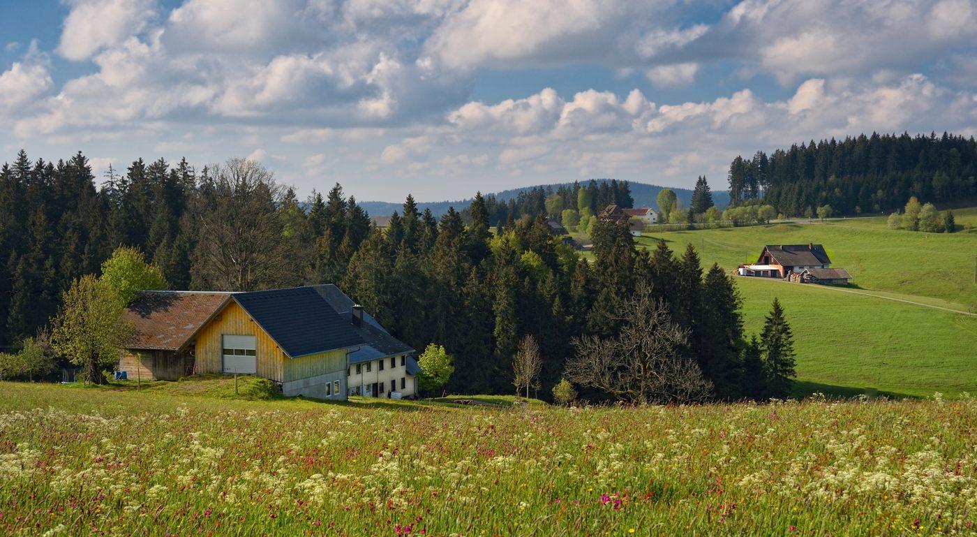 Schwarzwald #14