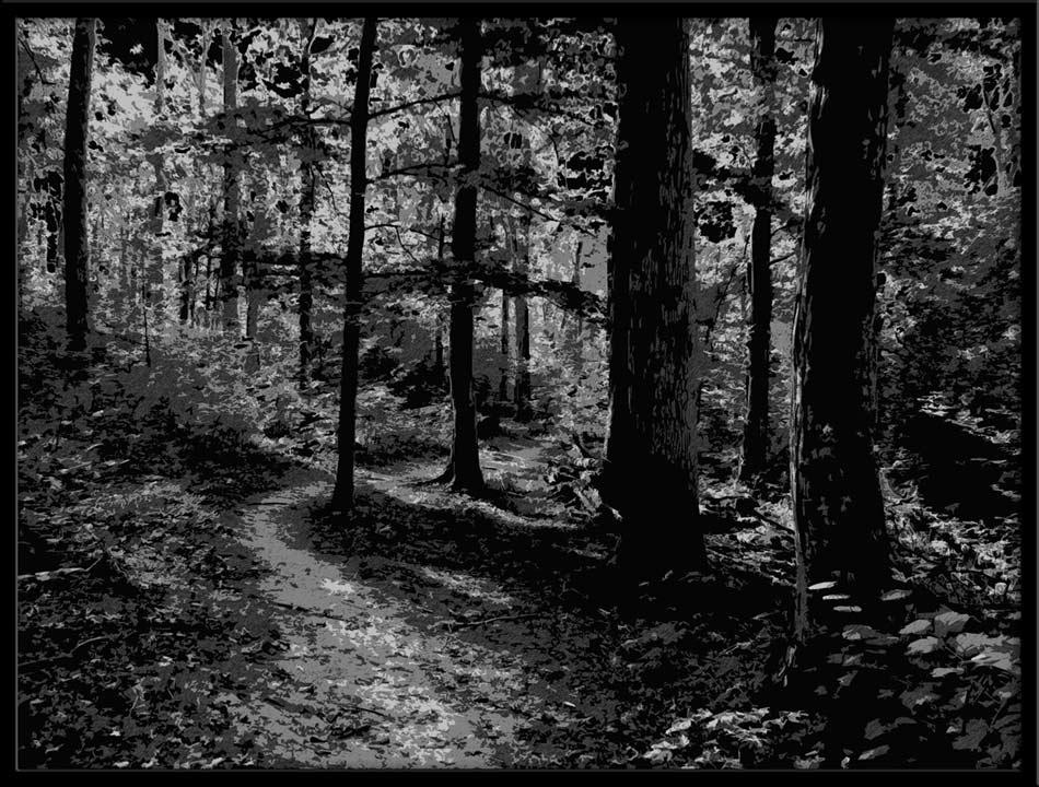 schwarzwald bild foto von rolf regler aus natur schwarz weiss fotografie 6770927. Black Bedroom Furniture Sets. Home Design Ideas